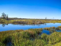 marsh river landscape stock image