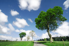 Blue skies and green trees Royalty Free Stock Photos