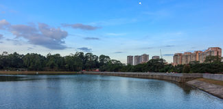Blue Skies of Macritchie Reservior #2 Stock Photography