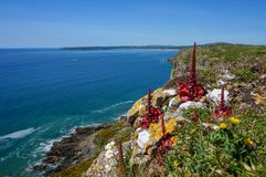 Beautiful coastal cliffs with red flowers 2. Blue skies and ocean with grassy cliffs and unusual red flowers. A classic Welsh coastal scene royalty free stock images