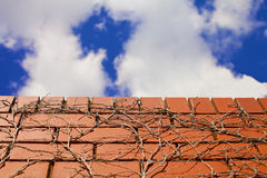 Blue skies over brick wall Stock Photography