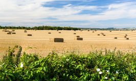 Blue skies over corn fields in England. Dramatic blue sky and clouds over harvested corn in Cotswolds in England Royalty Free Stock Photo