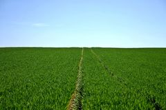 Blue Skies over a Green Grass Field Royalty Free Stock Image