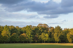 The blue skies over the park. This picture shows a blue sky covered with clouds and lit by a yellowish sunset light. You can see the some the park trees at the Royalty Free Stock Photo