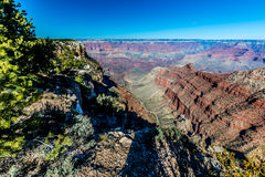 Blue Skies Over the South Rim of the Grand Canyon in Arizona.  With Trees. Royalty Free Stock Photos