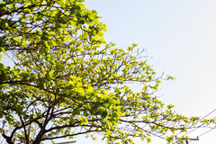 Blue skies and tree. Royalty Free Stock Images