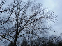 Blue skies winter tree branches Royalty Free Stock Photography