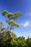 Blue sky. Green Tree with Blue Sky Stock Photo