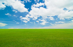 Blue sky. Green field under the blue sky Stock Images
