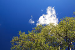 Blue sky. With trees and cloud stock image