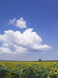 Blue sky. And lots of clouds Royalty Free Stock Image
