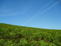 Blue sky. A vast field of green grass and the blue sky Stock Images