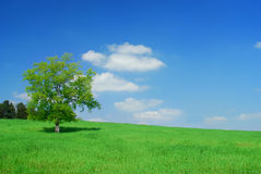 Blue sky. A tree in a field of grass with blue sky Royalty Free Stock Photo