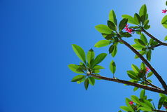 Blue sky. And green tree stock photos