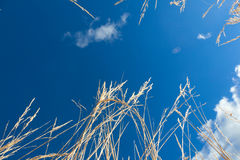 Blue sky above Stock Images