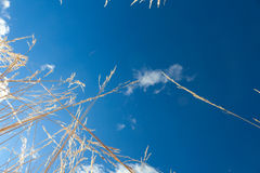 Blue sky above Royalty Free Stock Photography