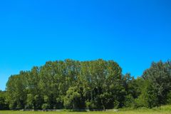 Blue sky above the green forest royalty free stock images