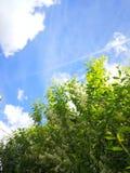 Blue sky above the green tree royalty free stock photos