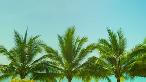 Blue sky above the tops of coconut trees on a tropical beach Royalty Free Stock Photography