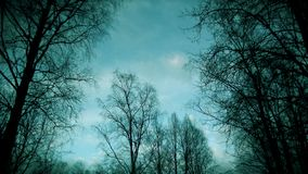 Blue sky against a forest stock images