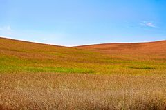 Blue sky against hills of gold and green ripening canola stock photos