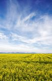 Blue sky against yellow field Stock Photos