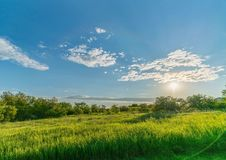 Boundless field on a summer day. The blue sky with airy clouds and bright sun, a richly green grassy meadow stretches to the forest belt Royalty Free Stock Photos