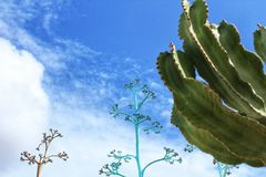 Free Blue Sky And Cactus Landscape In Almeria Royalty Free Stock Photos - 105726658