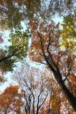 Blue sky in autumn forest Stock Photos