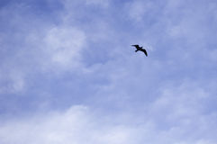 Blue sky background with a bird flying Royalty Free Stock Photo
