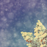 Blue sky background with christmas fir - vintage retro style Stock Photography