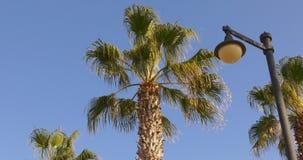 Blue sky background sun light palm 4k spain. Blue sky background sun light palm tree 4k spain stock video footage