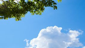 Blue sky background: white clouds and green tree branch. In clear sunny day. Travel, holidays, recreation. Appeasement and relaxation. View from below. Zooming stock footage