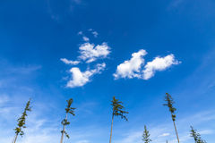 Blue sky background with white tiny clouds Stock Image