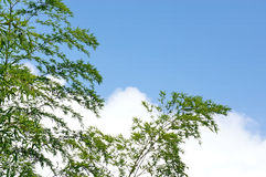 Blue sky bamboo branches silhouette. Eastphoto, tukuchina,  Blue sky bamboo branches silhouette Stock Photos