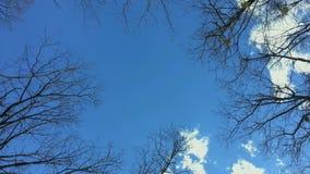 Blue sky from below stock footage