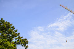 Blue sky and big tree and crane Royalty Free Stock Photo