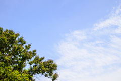 Blue sky and big tree Stock Images