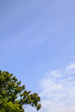 Blue sky and big tree Royalty Free Stock Photography