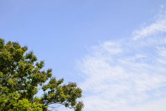 Blue sky and big tree Royalty Free Stock Photos
