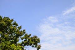 Blue sky and big tree Stock Photos