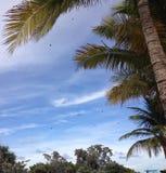 Blue Sky. Black birds in a blue sky Stock Image