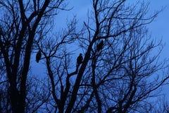 Blue sky, black birds Stock Photos