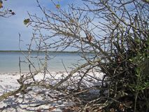 Deserted Sandy Florida Beach. Blue sky, blue water, deserted white sandy beach seen through a clump of tree branches royalty free stock photos