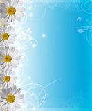 Blue sky with a border of daisies Stock Image