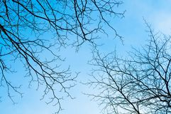 Blue sky with bough of tree. Beautiful natural of sky and tree abstract or background Royalty Free Stock Images