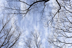 Blue Sky and branch Royalty Free Stock Image