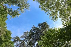 Blue sky through a break in the trees. Pretty blue sky through a break in the canopy of tall green trees Stock Image