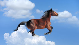 Blue sky with brown horse Royalty Free Stock Photography