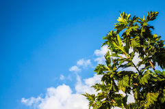 Blue sky and bud tree. In thailand Royalty Free Stock Photos